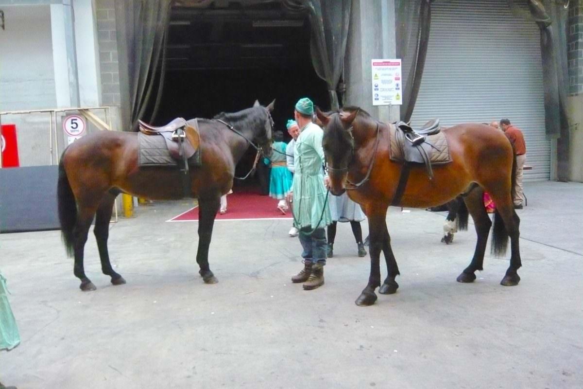 Rent Bay horses backstage