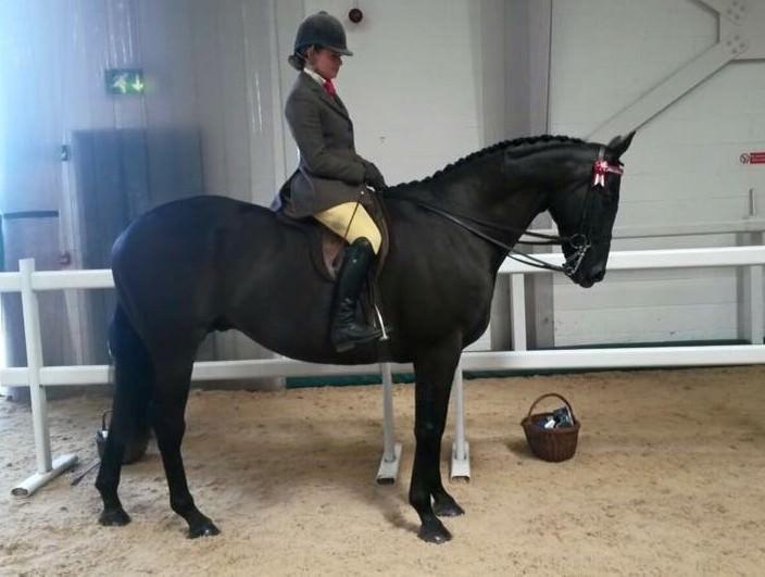 Rent Black horse rider