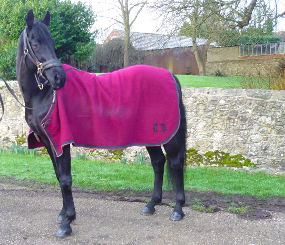 Rent Black Horse 7