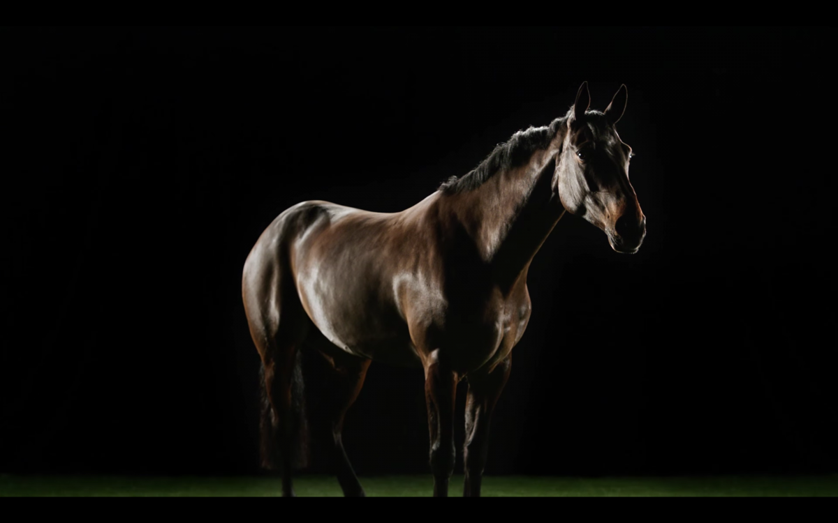 Rent Brown Horse