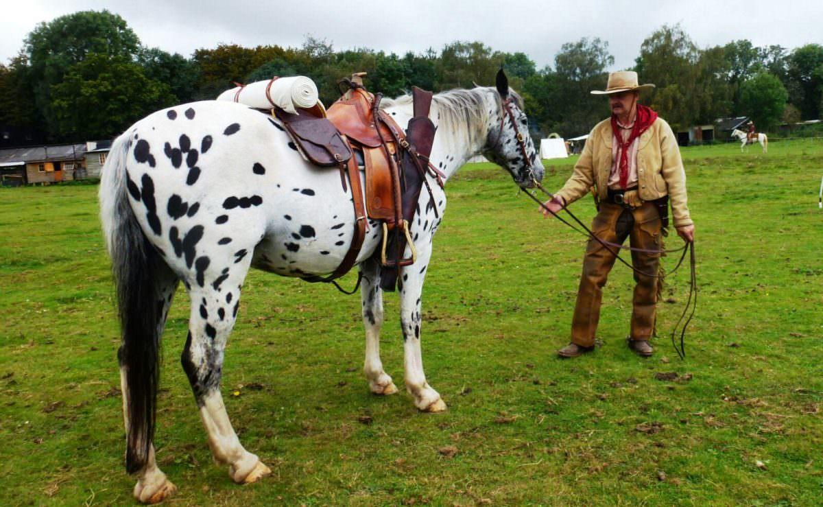 Rent Cowboy horse
