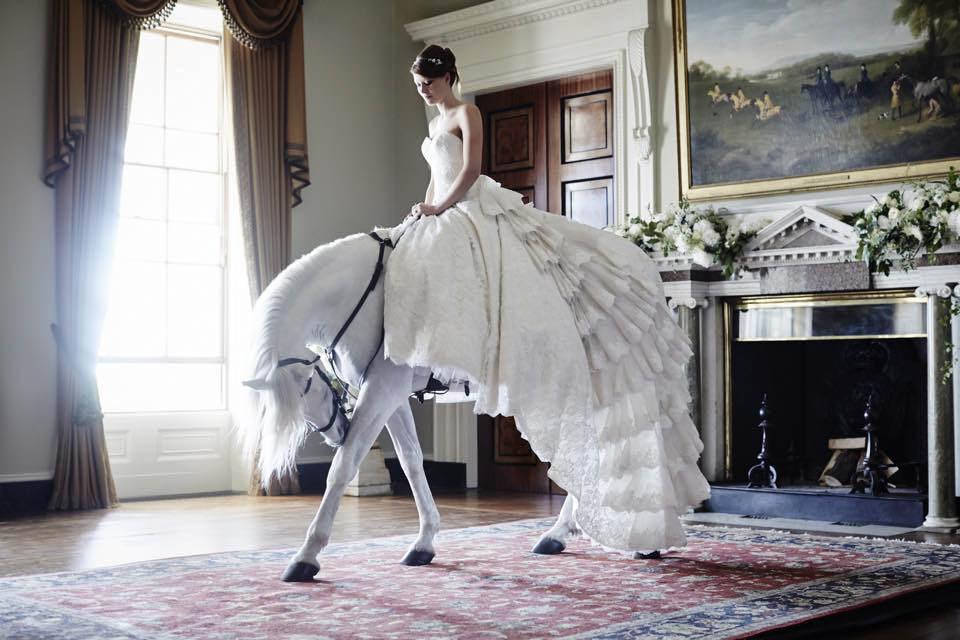 Rent Wedding horse