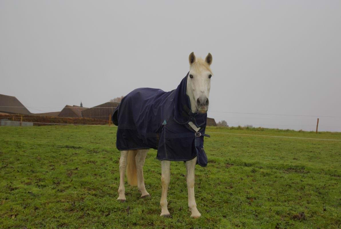 Rent White Horse 11