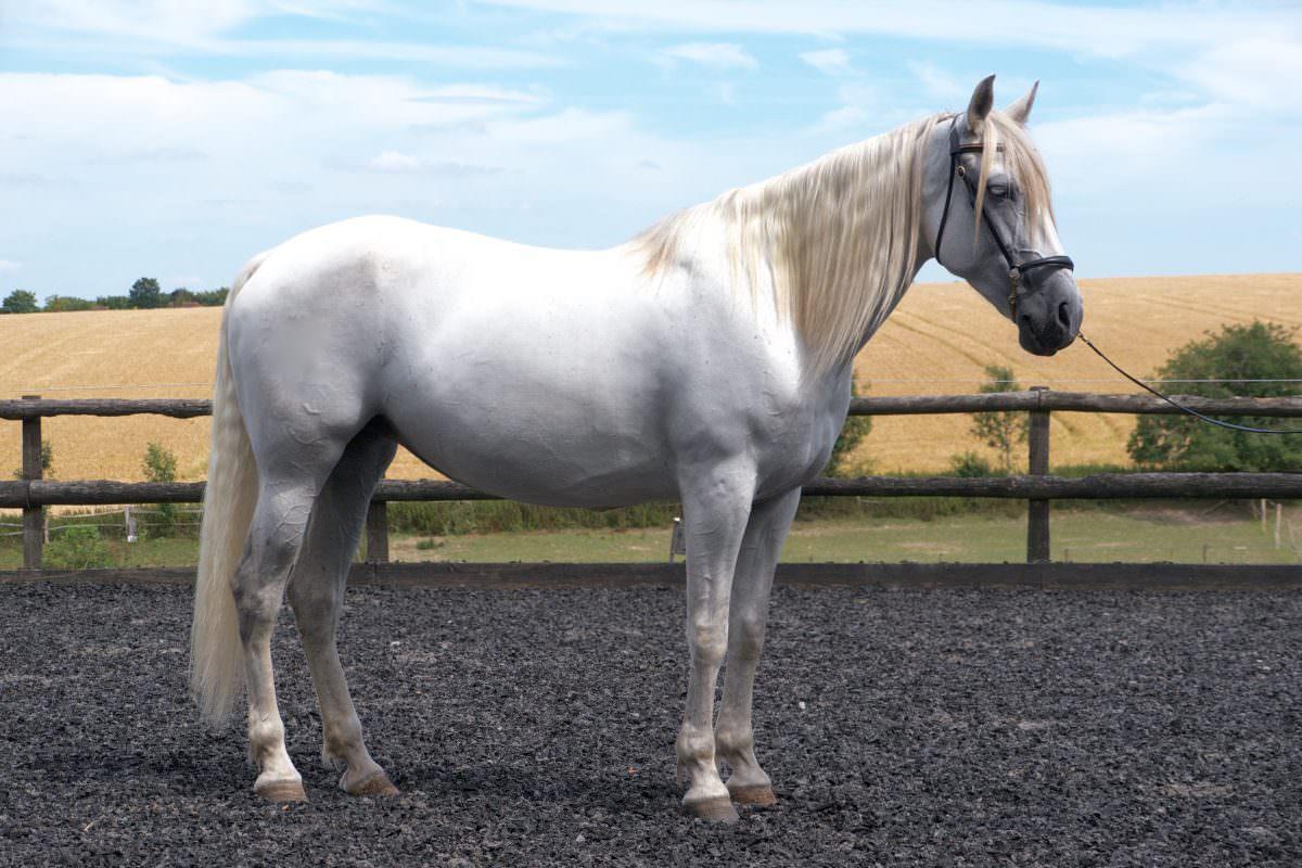 Rent White Horse 3