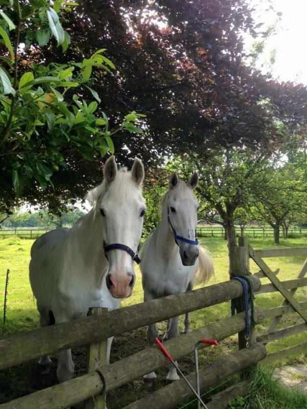 Rent White horses 2
