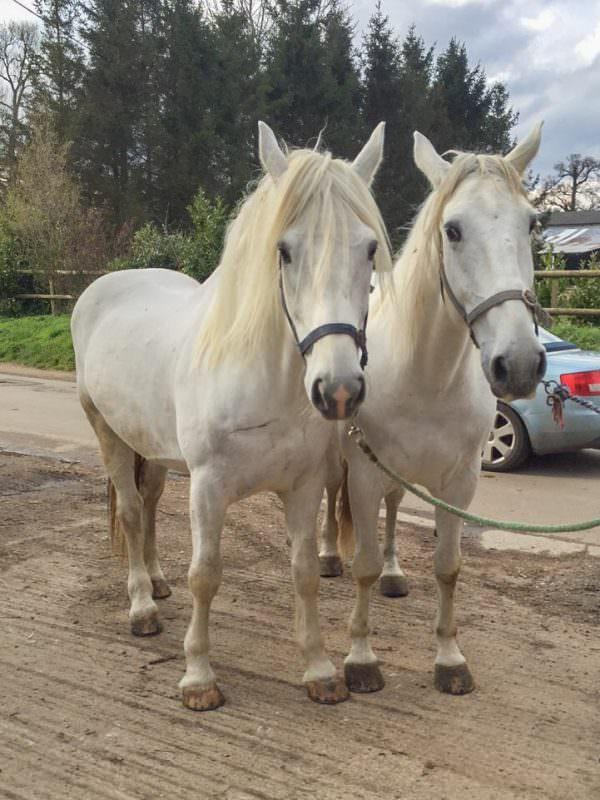 Rent White Horses 3