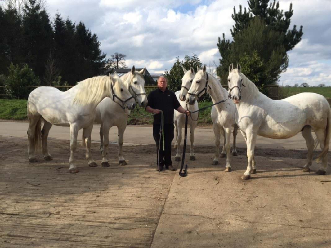 Rent White Horses 1