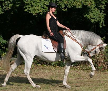 Rent Grey Horse 1