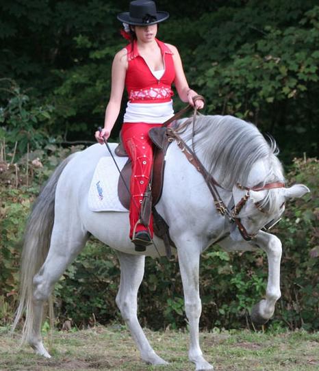 Rent Grey Horse 2