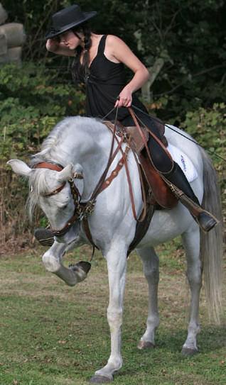 Rent White Horse 7