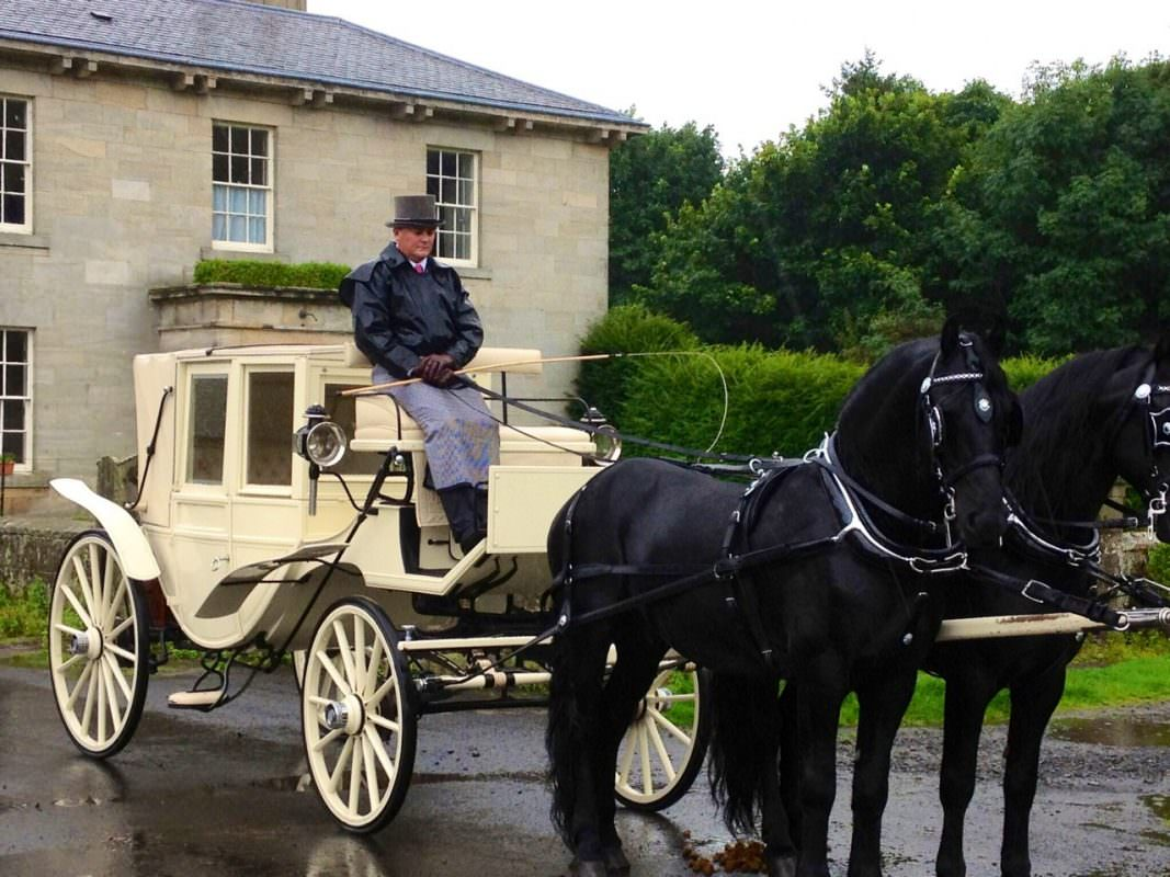 Black Horses White Carriage A Z Animals