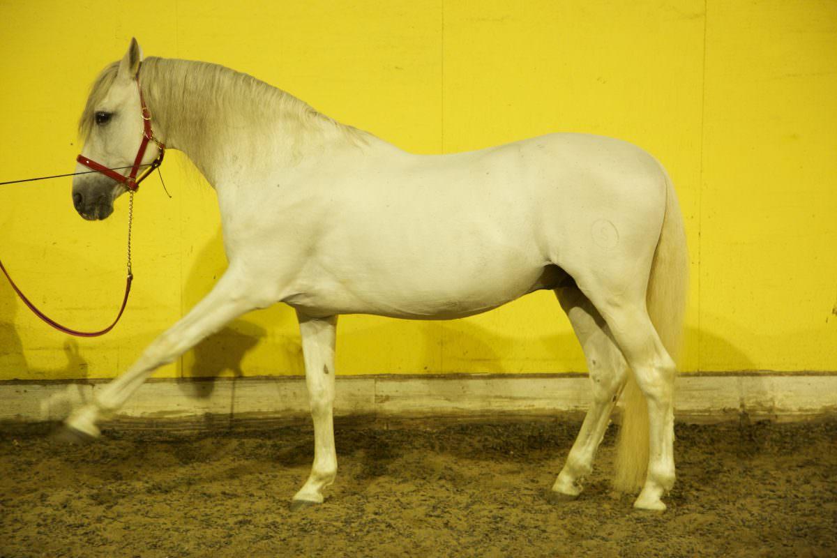 Rent White Horse 2