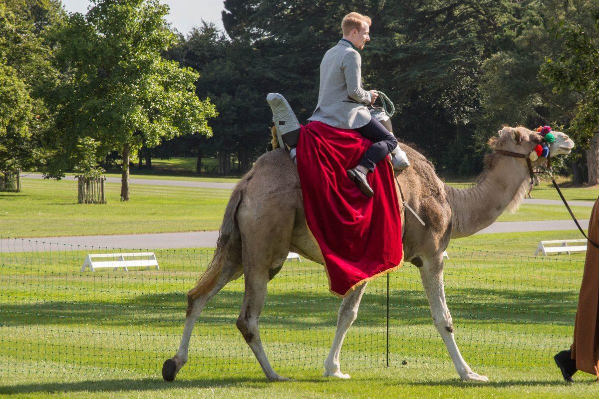 Rent Camel