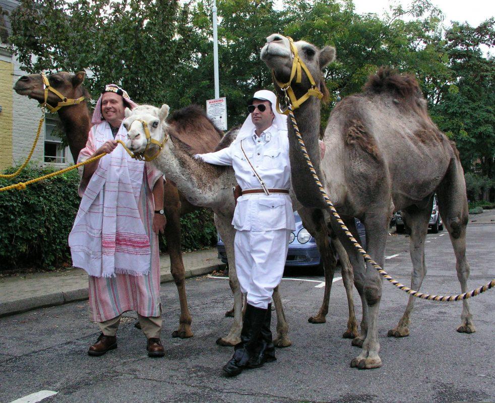 Rent Camels 1
