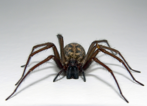 Rent House Spider 1