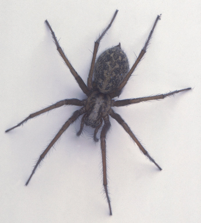 Rent House Spider 2