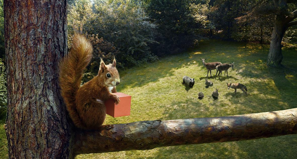 Rent Red Squirrel & Woodland Animals