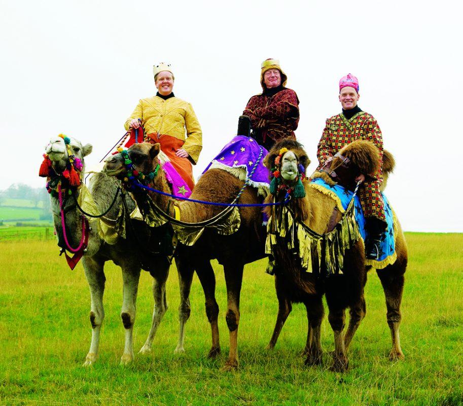 Rent Camels 2