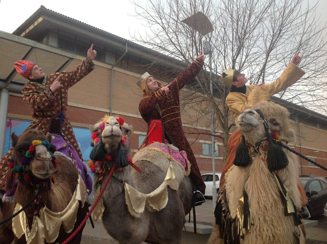 Rent Camels 3