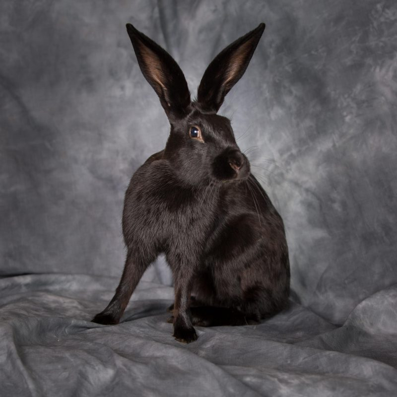 Rent Hare 2