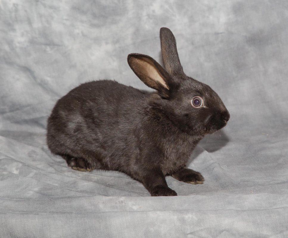 Rent Rabbit 2
