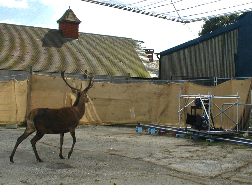 Rent Red Deer Stag