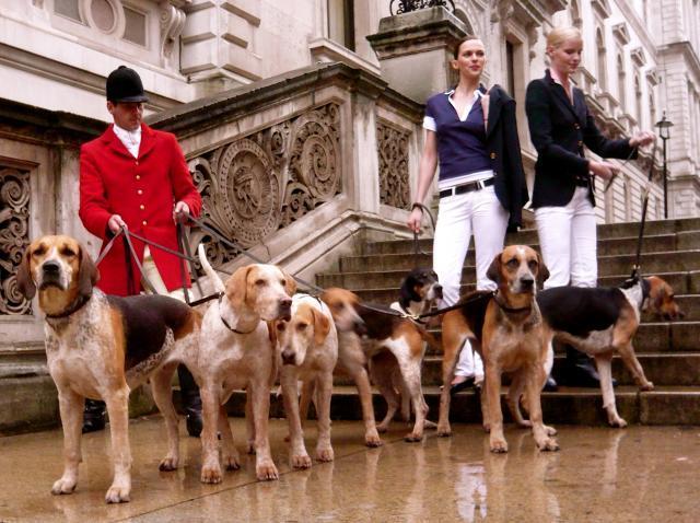 Rent Foxhounds