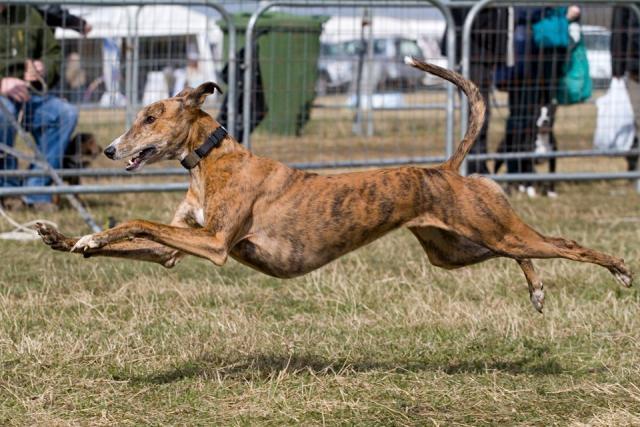 Rent Greyhound 2