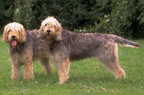 Rent Otterhounds