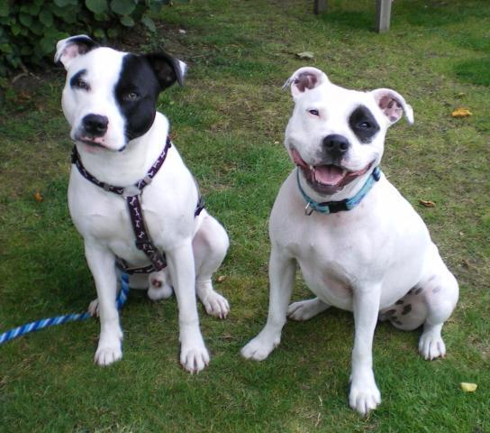 Rent Riley & Zoe